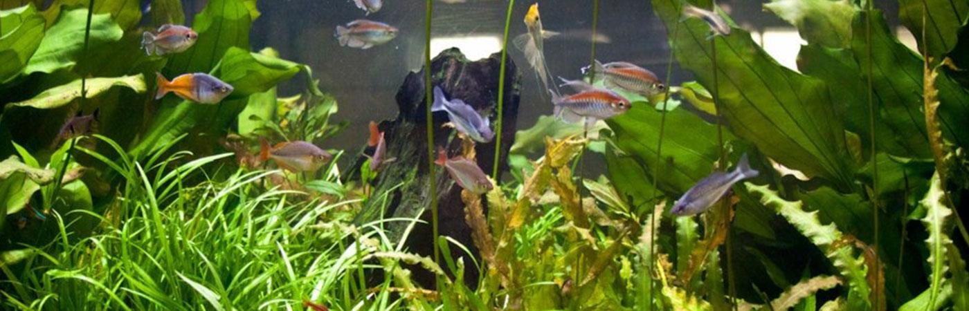 store store akvarium